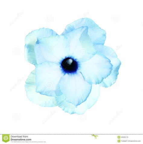 imagenes de rosas solas solas flores de la azalea foto de archivo imagen de
