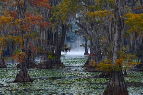 Nature Duvet Cover Caddo Lake Morning Photograph By Snow White