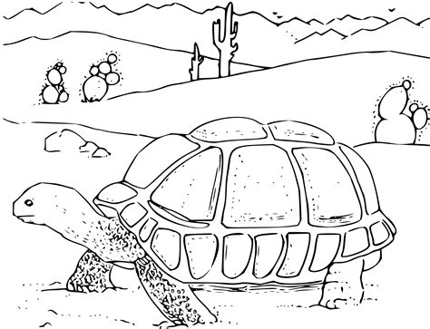pages for toddlers free printable turtle coloring pages for animal place