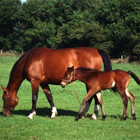 tax deductions  animal breeding inventory  business