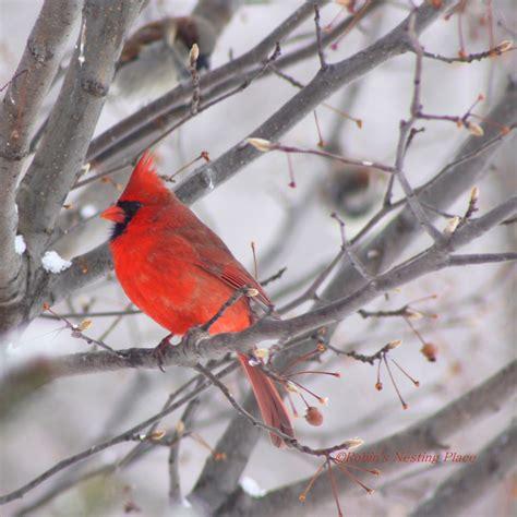 how to make a winter bird suet feeder lana apps directories