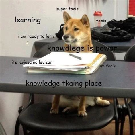Shibe Doge Meme - the best of the hilarious shibe meme