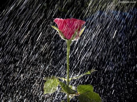 imagenes tiernas de lluvia sonidos e im 225 genes de lluvia y tormenta youtube