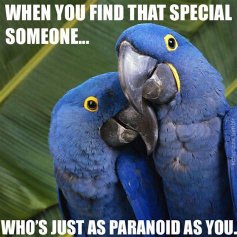 Parrot Meme - image 167135 paranoid parrot know your meme