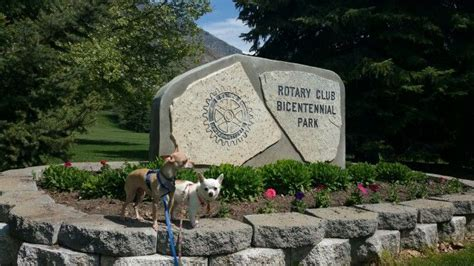 rent a puppy provo bicentennial park bark park park in provo utah