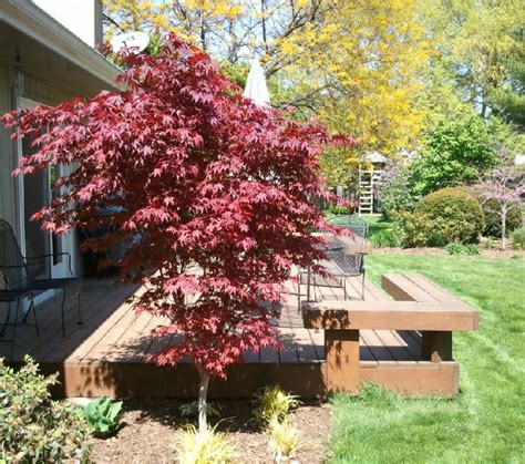 deciduous trees spring tree farm innisfil