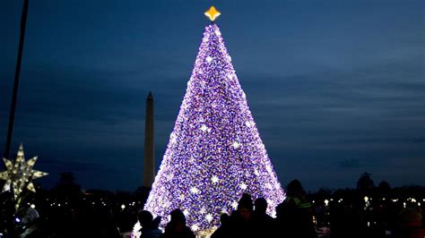 best christmas trees near me best 20 trees around the world