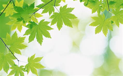 wallpaper green leaves on white background green leaves and green backgrounds