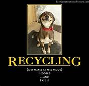Recycling Dog  Demotivational Poster
