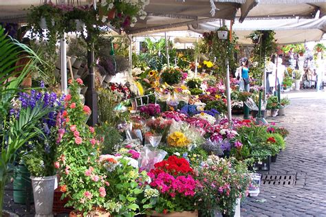 pianta con fiori a cana co dei fiori market the quot field of flowers quot rome