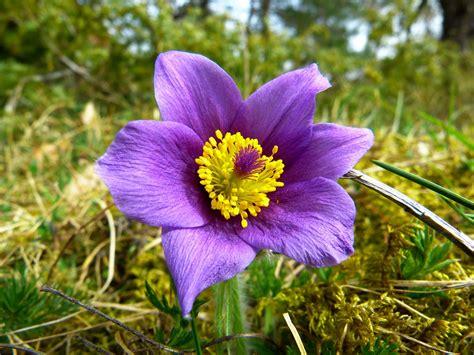 sognare un mazzo di fiori cosa significa sognare fiori interpretazione dei sogni