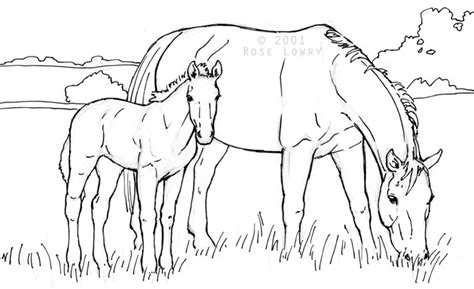 coloring pages of horses and foals drawings