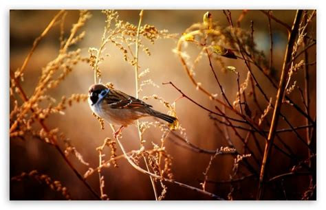 imagenes animales hd 1080p imagenes de animales en hd 1080p imagui