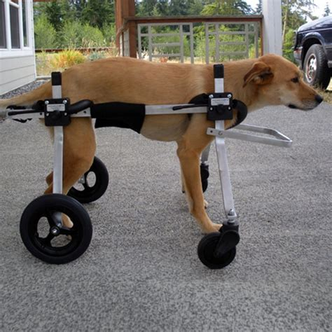wheelchair for dogs 31 best images about wheel chairs on for dogs and pets