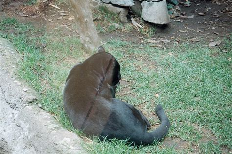 animales animales zoologico de chapultepec animales www pixshark com images galleries with a bite