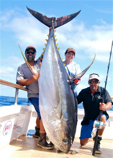 best sport fishing boat in san diego san diego sportfishing puerto vallarta fishing