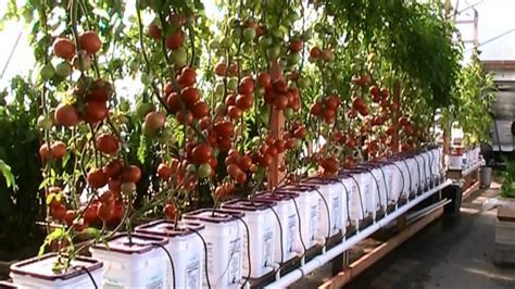 hydroponic gardening swimming pool farms conquer fear