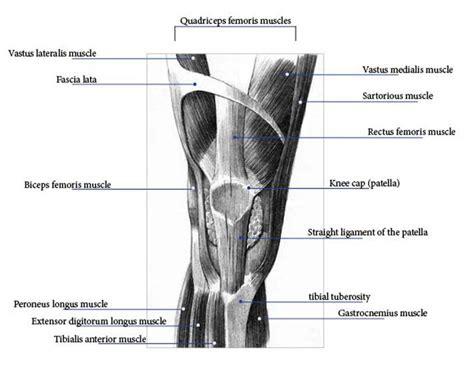 strengthen ligaments tendons for bjj youtube