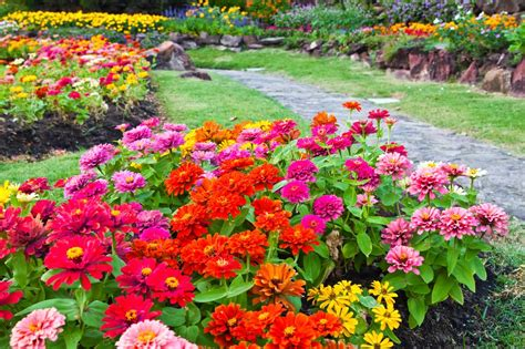 Low Maintenance Flower Garden Low Maintenance Perennials For Your Garden Myfoodforu