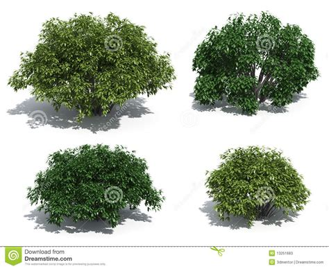 Bush Topiary - arbustos fotos de stock imagem 13251683