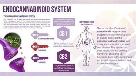 cbd hemp the secret cure of the human books cbd cannabidiol in marijuana