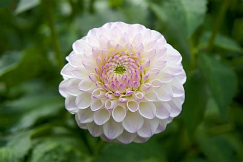 Image Of Garden Flowers Freeuse Garden Flower Closeup Up High Quality Photo