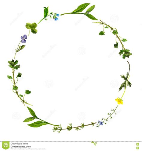 watercolor drawing floral frame stock illustration image