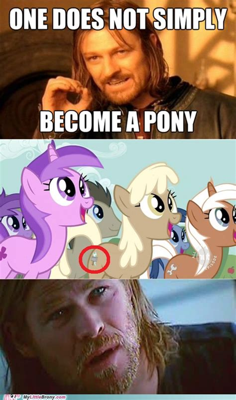 Funny Pony Memes - 1000 images about little ponies on pinterest friendship