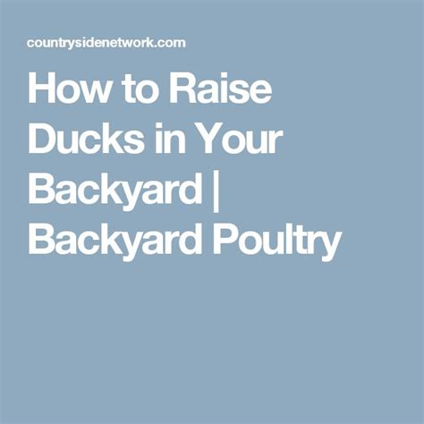 1000 ideas about backyard ducks on raising ducks duck house and duck pond