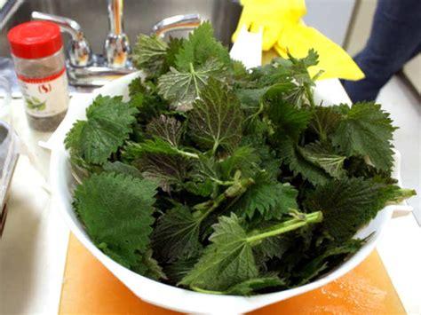 cuisiner les feuilles de betteraves rouges cuisiner les feuilles des l 233 gumes