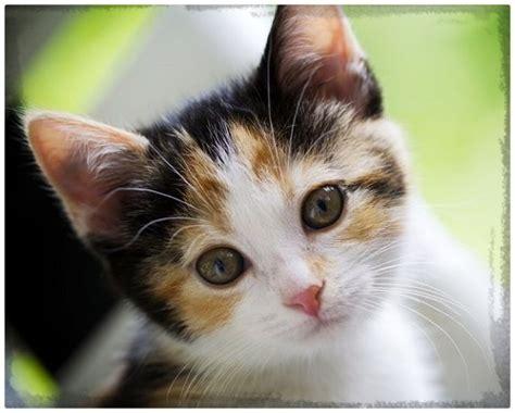 imagenes increibles de gatos fotos de gatos tiernos para descargar archivos gatitos