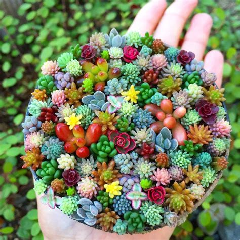tiny plants tiny succulent planters are the cutest thing you will see