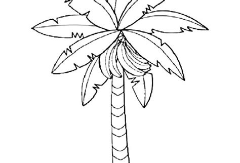Banana Tree Coloring Page free coloring pages of outline of a banana