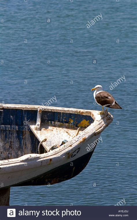 bow of a boat in spanish a gull sits on the bow of a boat at concon chile stock