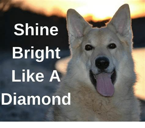 Shine Bright Like A Diamond Meme - 25 best memes about shine shine memes
