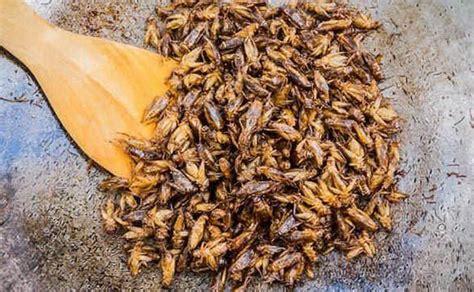 alimentazione ecosostenibile farina di grillo la nuova frontiera cibo