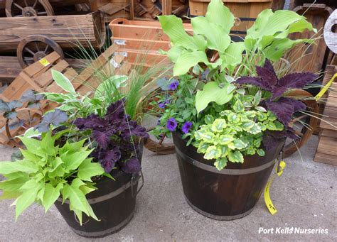Design For Potted Plants For Shade Ideas Annual Flower Pot Ideas Port Kells Nurseries Garden Photo Flowers Garden