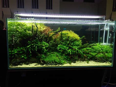 Aquascape Tank For Sale by 1839 Best Aquascape Images On Aquascaping
