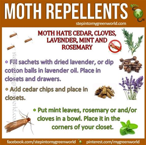 Moths In Pantry Home Remedies by Best 25 Moth Repellent Ideas On