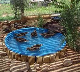 How To Build A Pool In Your Backyard How To Build A Duck Pond Homestead Survival
