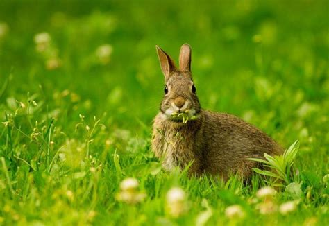 new year rabbit facts 17 best images about rabbits on crafts