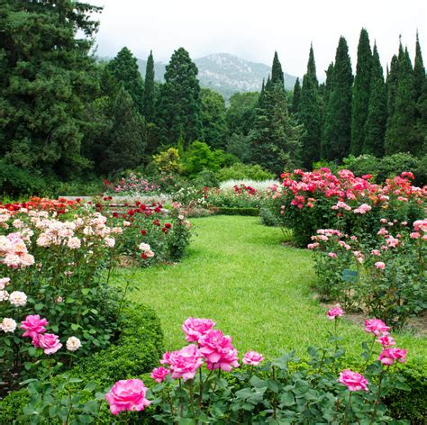 backyard rose gardens plant and garden ideas for your home love home designs