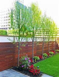 trees for small backyards best 20 privacy trees ideas on privacy