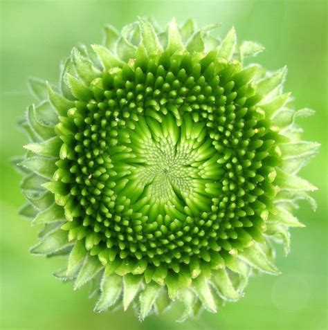 natural pattern flower stunning fractals in nature julie boyd