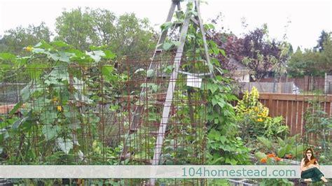 trellis garden ideas low cost no cost garden trellis ideas