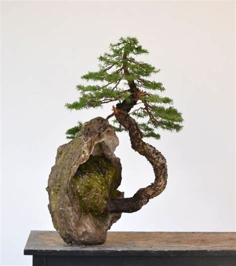 libro bonsai from native trees m 225 s de 1000 ideas sobre bonsai en 193 rboles