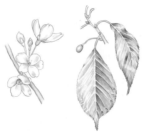 Drawing Basics by Drawing Basics