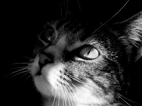 bianco  nero concorsofoto