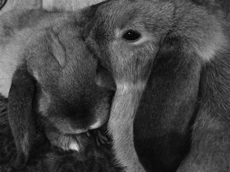 my two valentines my two bunnies and winter how to keep a bored