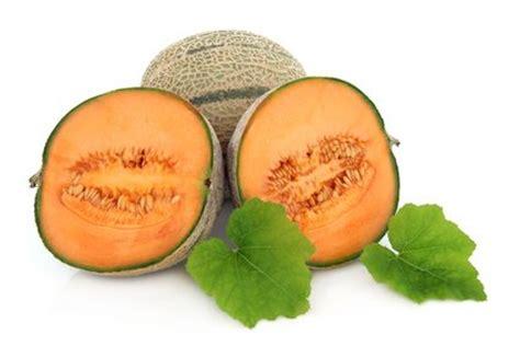 chagne rock a melon 250ml selling digital rock melon 0 10 powered by santu